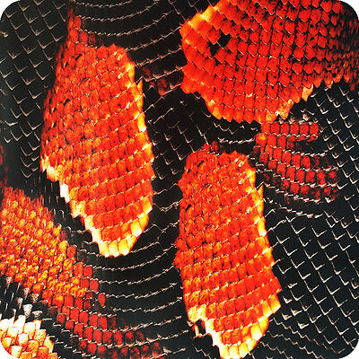 Hydrographic Film Hydrographics HYDRA WTP hydrodipping hydrodip snake HPA-003