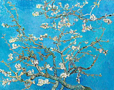 Almond Blossom by Vincent van Gogh A2+ High Quality Canvas Art Print