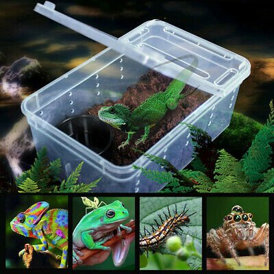 Transparent Plastic Box Insect Reptile Transport Water Breeding Feeding Case