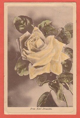 Vintage Postcard Pale Yellow Rose Postally used Fran Karl Druschki