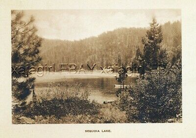 Kings Canyon National Park, Sequoia Lake, Giant Trees, c1915 Photogravure Print