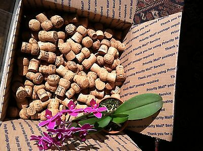Natural Wine Corks - Champagne Only - 250-275/ Box - All Sales Help Save Trees