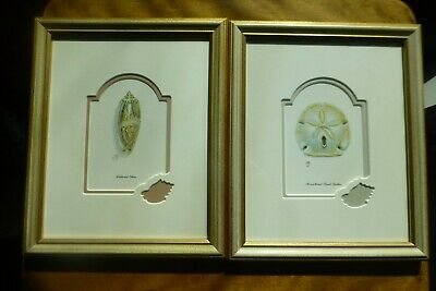 Two Framed Picture Frames with Glass SHELL Drawings 23.5 cm x 28.5 cm Seaside