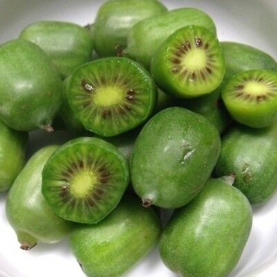 200 Hardy Kiwi, Actinidia arguta Vine Seeds Baby grape/cocktail kiwi Usa Seller