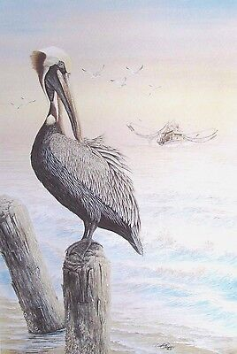 Louisiana Brown Pelican by Debbie Folse Chiasson (Signed and Numbered)