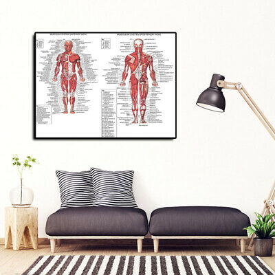 Muscular System Poster Anatomical Chart Human Body Anatomy Canvas Painting AU