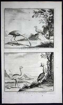 1726 - South Africa animal birds flamingo ostrich Valentijn engraving