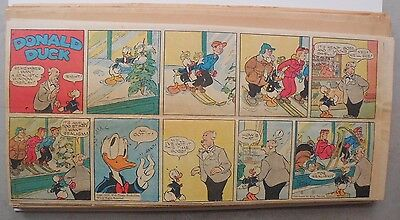 (40) Donald Duck Sunday Pages by Walt Disney from 1950 Third Page Size