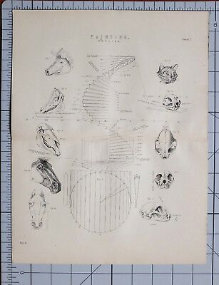 1868 Print Painting Outline Various Diagrams Animal Skulls Perpendicular