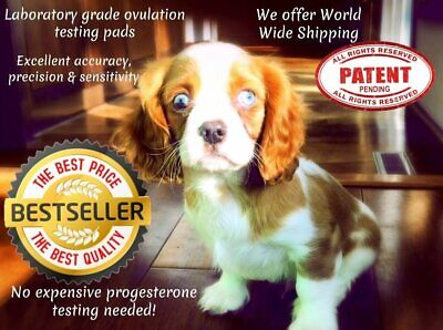 100 🔥Canine Ovulation Fertility 🐾Testing Pads – Progesterone Test @ Home🐶🌺