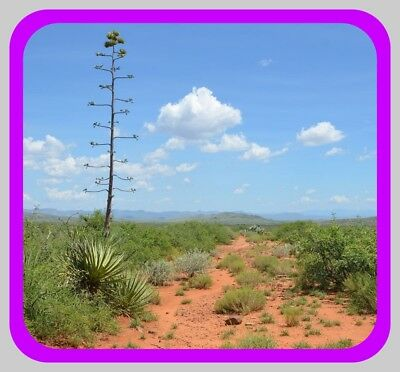 40 Acres~Amazing Southern Arizona Land~See Actual Pics~$280 A Month