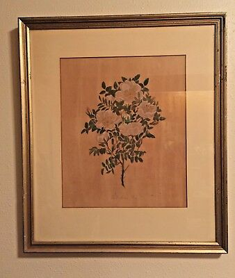 68479a27ad1e Tall Scotch Rose Vintage Framed Art Print Flower Painting 16
