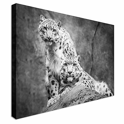 Frontal Portrait Of Snow Leopard Pair Canvas Wall Art prints high quality