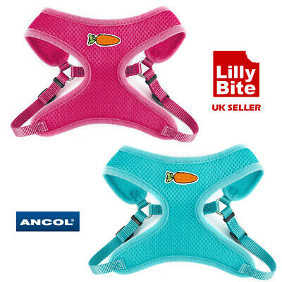 Ancol Harness and Lead for Rabbits and Small Pets
