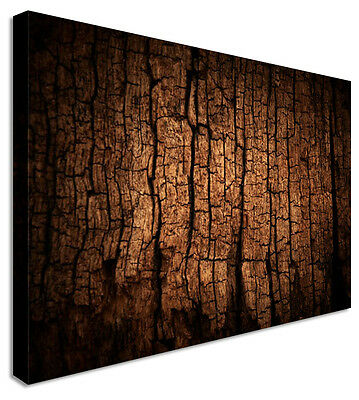 Large Tree Bark Canvas Wall Art Printed Pictures - Large+ Any Size