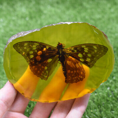 Beautiful Collectible Amber Inner Inlay Butterfly True Insect Specimens 106G