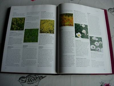 Gardeners Guide To Perennials - Graham Rice - Lovely Gardening Book