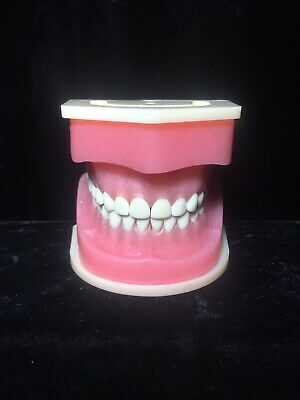 Vintage Dental Model Teeth Implants Maxilla Mandible 1303 1304 Human Tooth Mouth