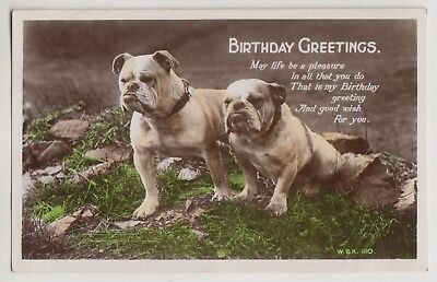 VINTAGE GREETING POSTCARD Birthday Wishes Dog Dogs 53