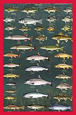 Fresh Water Game Fish Of North America Laminated Educational Reference Chart Pri