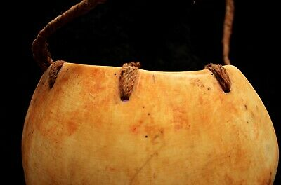 Beautiful Large Bailer Shell Pectoral - Southern Highlands PNG