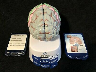 Ortho-McNeil Neurologics Drug Rep Brain Anatomical Pharmaceutical Model, 6 part