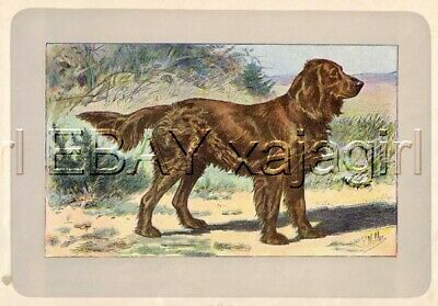 DOG German Spaniel, Extremely, Rare Antique 100-Year-Old French Dog Print