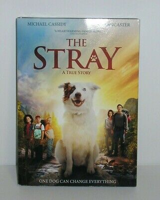 The Stray DVD True Story Family Movie Religious Christian Dove Approved New