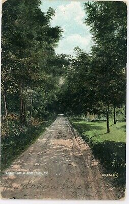 "Antique White Plains New York Ny ""Lovers Lane"" Undivided  Postcard 1907 Cancel"