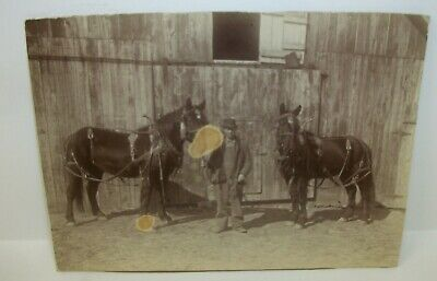 Antique Cabinet Card Photo - Man with His Prize Horses