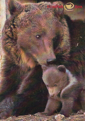 Mother and Young Bear Barenpark Bern Switzerland 21x15cm Postcard used VGC