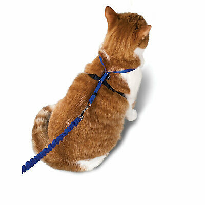 PetSafe Gentle Leader Come with Me Kitty Harness & Bungee Leash in Blue
