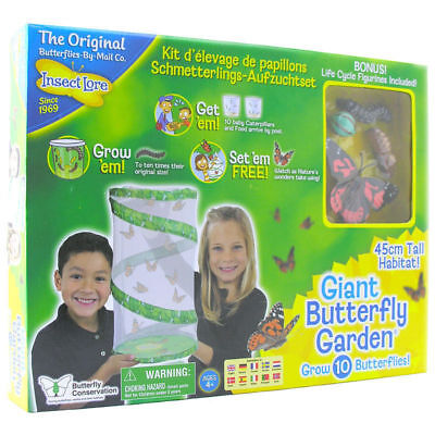 Giant Live Butterfly Garden Hatching Kit -Insect lore GROW 10 butterflies