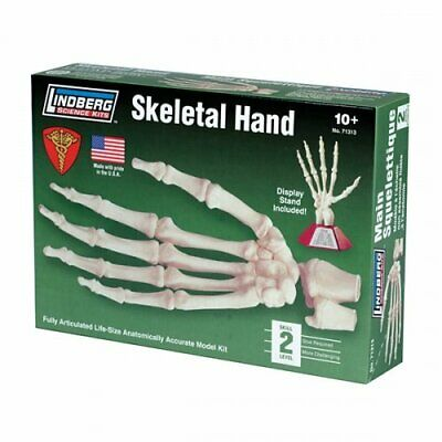 Lindberg Hand Skeleton Model On Stand New Anatomical Model Bones