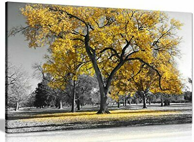 Large Tree Yellow Leaves Black White Nature Canvas Wall Art Picture Print 24x16