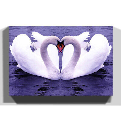 Canvas Wall Art Picture Print White Swan on a Lake (4)