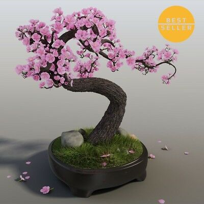 Bonsai Cherry Blossom Tree Australia Bonsai Tree