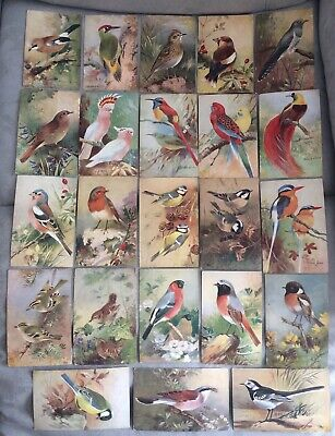 Collection Of x 23 Vintage c1930's Art Bird Postcards By Roland Green