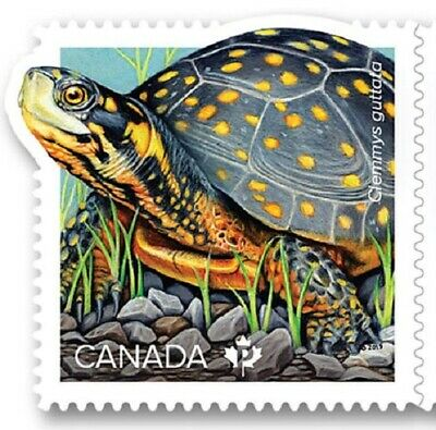 2019 Canada 📭 ENDANGERED TURTLES 🐢 SPOTTED TURTLE  🐢 MNH Stamp from Booklet📬