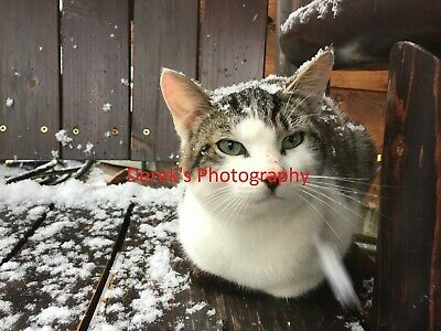 Photo,Wallpaper Digital Picture free ship world wide,Snow Kitty