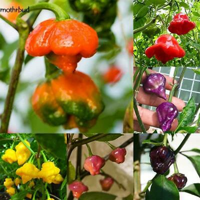 100ps Carolina Reaper Seed Red Hot Chilli Pepper Rare Viable Seeds Extreme M5BD
