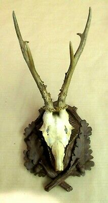 Roe Deer Antlers on Antique Black Forest Plaque VIII