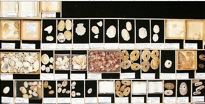 Shell collection, worldwide, 72 lots of Fissurellidae