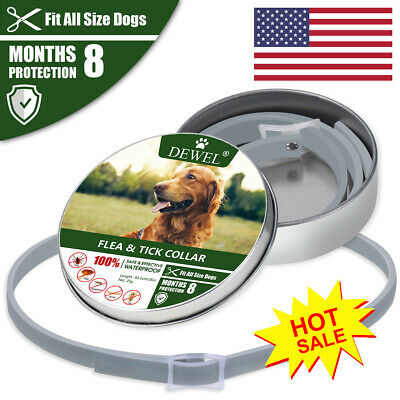 Protection DEWEL 63cm Pet  Flea and Tick Collar for 8 Month Dogs US Stock More