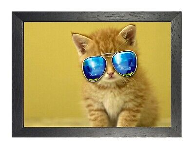 Cat #14 Poster Animal Picture Pet Photo Print Funny Lovely Kitty Glasses Artwork