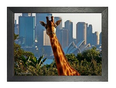 Giraffe Hello Funny Poster Wild Beautiful Animal Picture City View Artwork Print