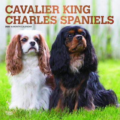 Cavalier King Charles Spaniels 2020 Square FOIL Wall Calendar by Browntrout