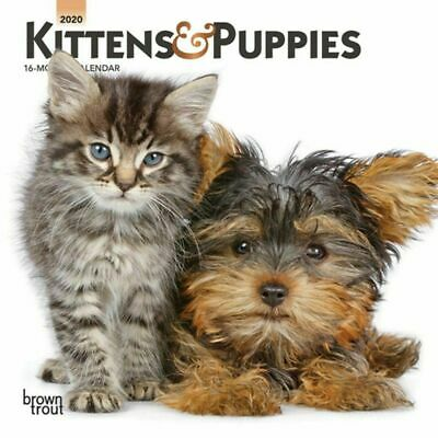 Kittens & Puppies 2020 Mini Wall Calendar by Browntrout Publishers Free Post