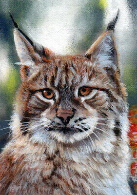 Original Aceo Painting Lynx Cat Wildlife Miniature Art by Christina Schulte