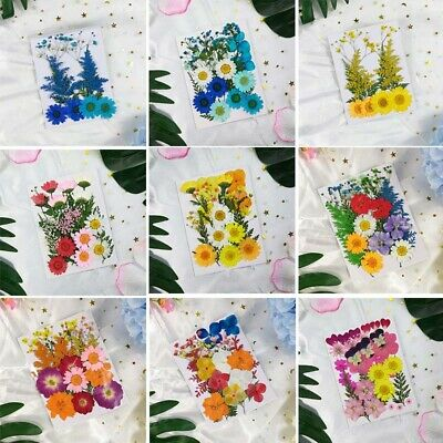 Multiple Pressed Flower Collections Dried Flowers DIY Art Craft Scrapbook Decor